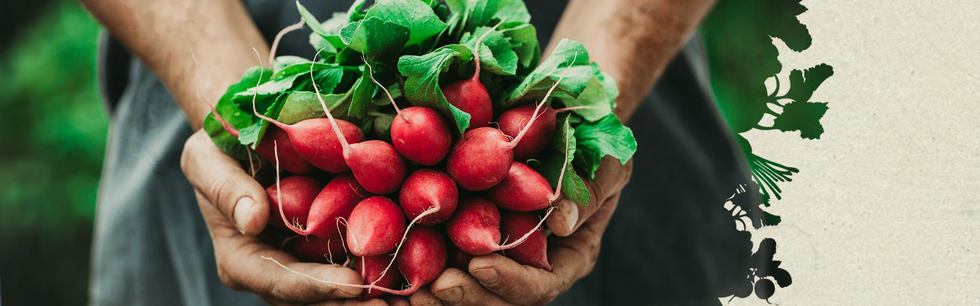 Charlie's Produce Header | Seattle Marketing Agency | CMA